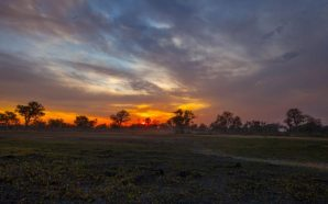 Afrika'nın ruhunu Botswana'da keşfettim