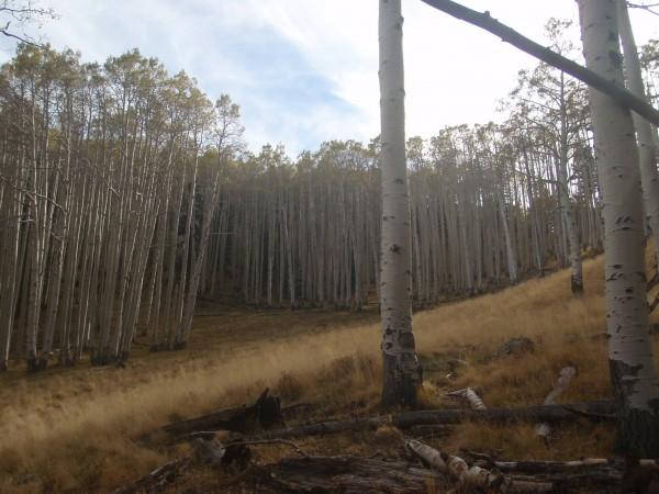 Lockett Meadow off the path
