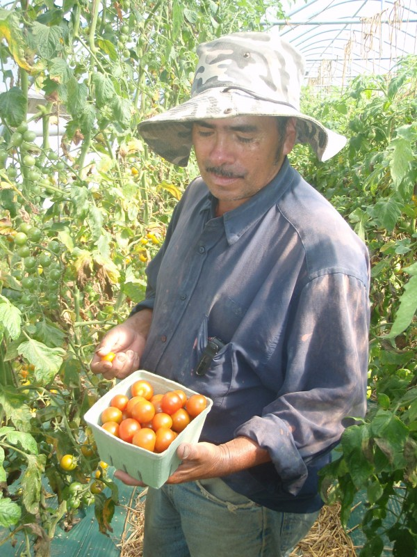 Farm work for travel funds