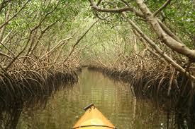 clearwater Florida Kayaking