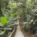 Kuala Lumpur Nature Preserve
