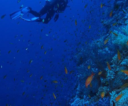 The Very Best of Red Sea Diving
