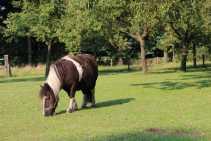 Vakantiehuis Dwingeloo Paardenvakantie (14)-s