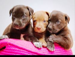Supreme Click Below To See Our Adoptable Animals Valley Humane Society Casa Az Home Fox Valley Humane Society Volunteer Fox Valley Humane Society Donations