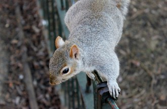 squirrel-111258_1280