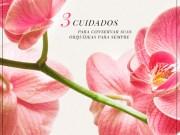 post orquideas - banner 0-destque