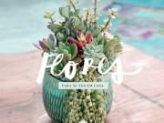 flores para se ter em casa-destaque