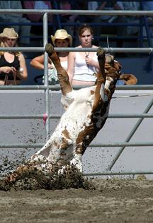 calf-roping-4med