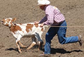 calfcruelty2