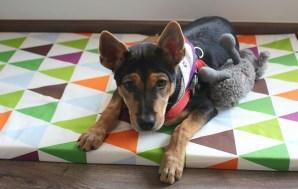Healthy Dog Treats Made with Love at The Barkery, Joo…