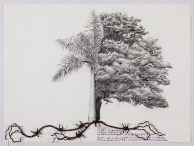 Hyphenated lives (Oak-palm)
