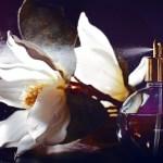seductive fragrances