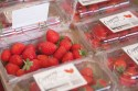 Cappeny Estates, South Africa, Strawberry farming