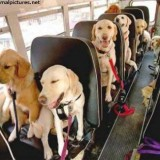 pets go to vet on albuquerque bus