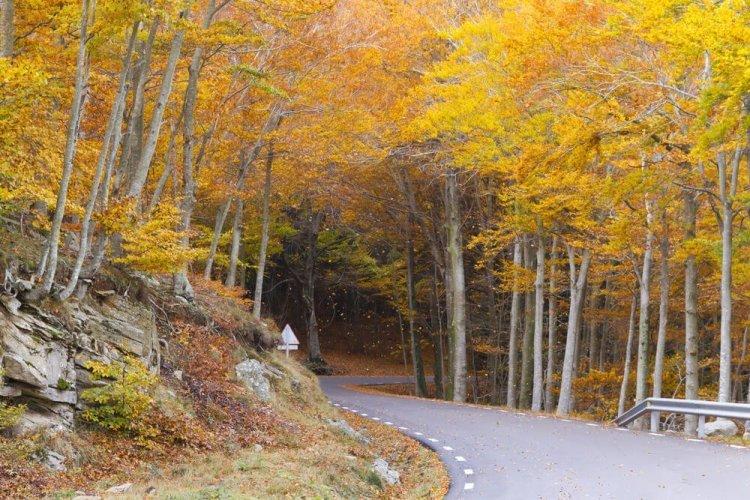 autumn montseny