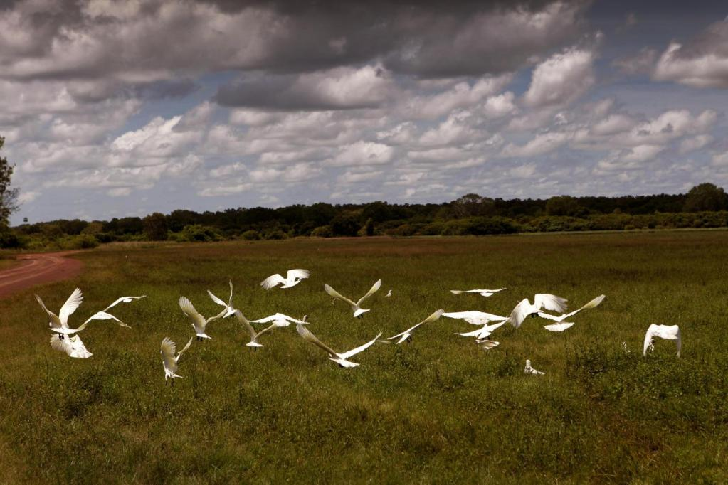 Mary River Wetlands, Australia