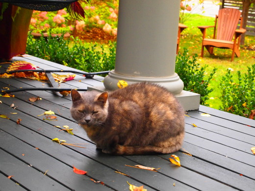 The perfect Fall cat in Rhode Island