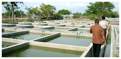 de Venecia fisheries