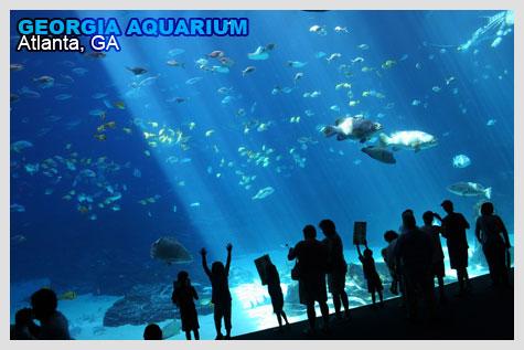 Georgia Aquarium viewing theater