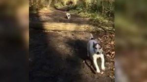 Το περίφημο άλμα του σκύλου