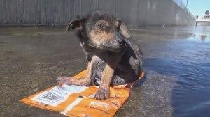 Συγκινητική διάσωση ενός σκύλου που βρέθηκε κακοποιημένος σε ποτάμι