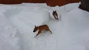 Ο μεγάλος σκύλος τρολάρει τον μικρό
