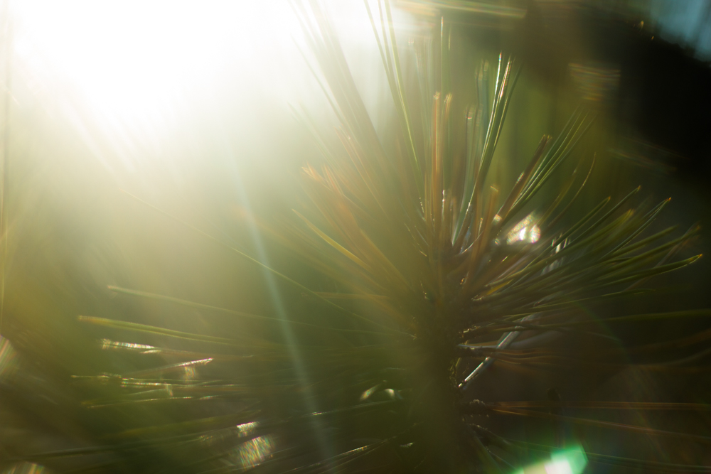 Natural Light Inspiration-4