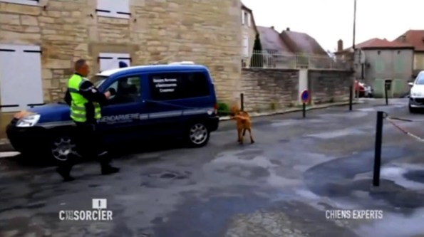 GN-les-chiens-experts-de-la-gendarmerie-de-gramat-1-2