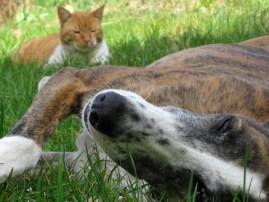 Foto eines Hundes und eine Katze im Gras