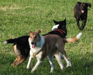 Foto Hunde rennen auf der Wiese