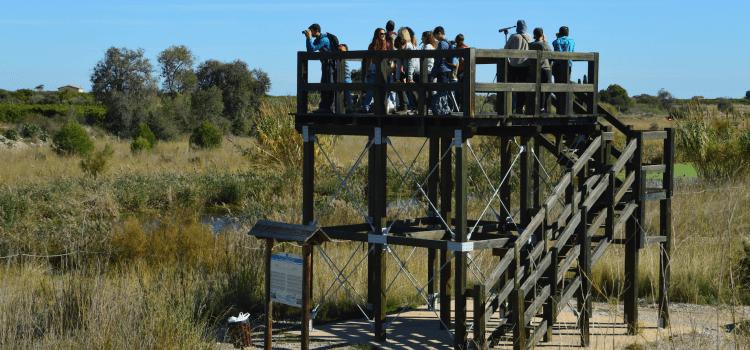 El primers turistes ornitològics familiars de la tardor descendeixen en la Desembocadura del Millars