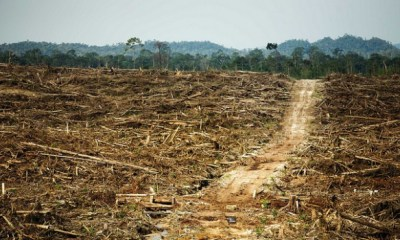 Ecocide-Deforestation-620x350