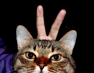 Prenez soin des oreilles de votre chat ou de votre chien