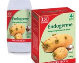 Endogerme Kollant