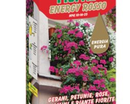 Flortis Energy Rosso