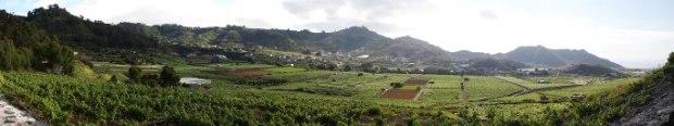 zona de viñedo en Tacoronte Acentejo