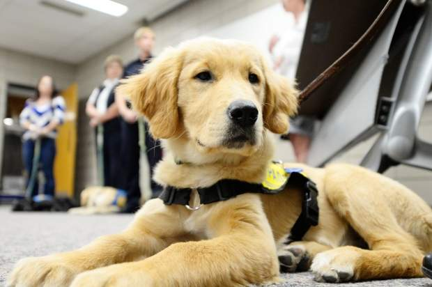 Puppy Pals – Pet Therapy
