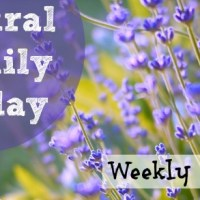 Natural Family Friday :: August 29, 2014