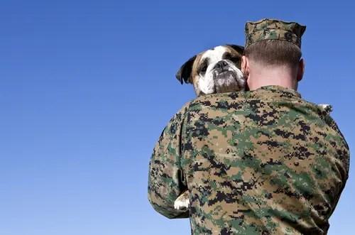 2service-dogs