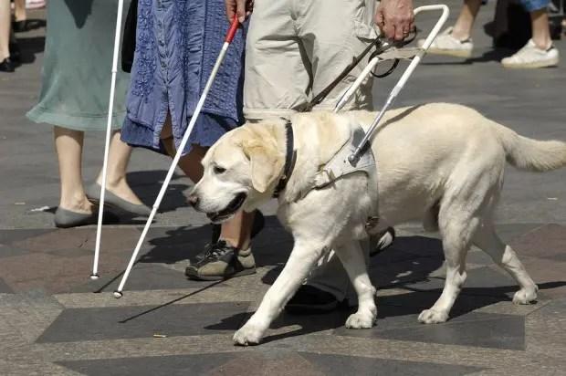 4service-dogs