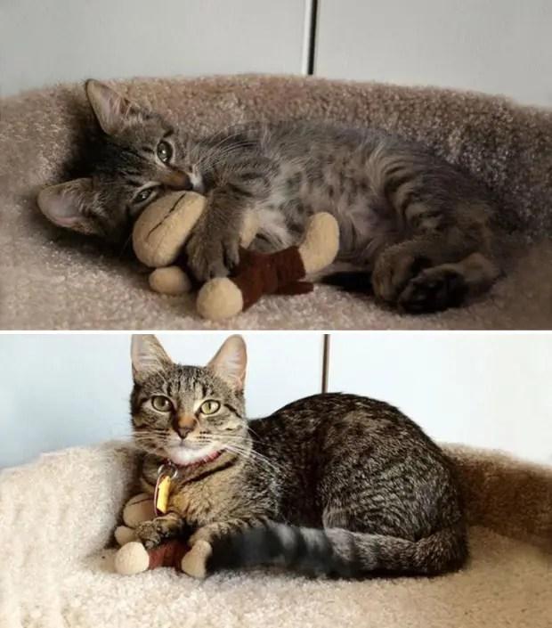 gatos creciendo (25)