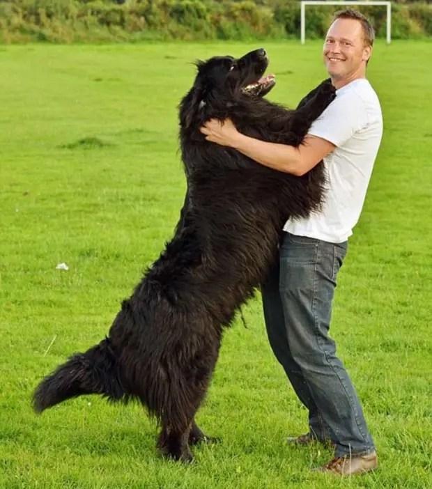 gente que tiene perros sabe (23)