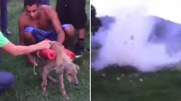 explota perro honduras