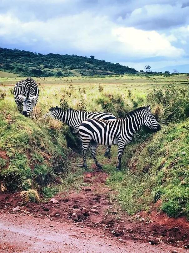 mujer-animales-cazadores-africa-zebra