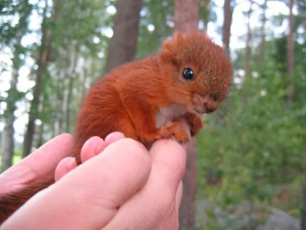 adorables animales bebe 18