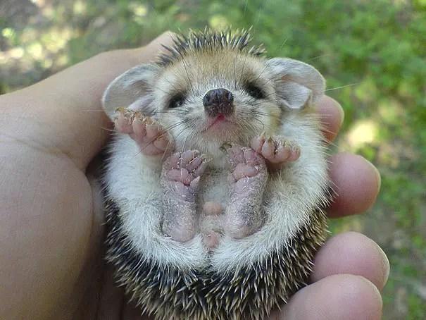 adorables animales bebe 2