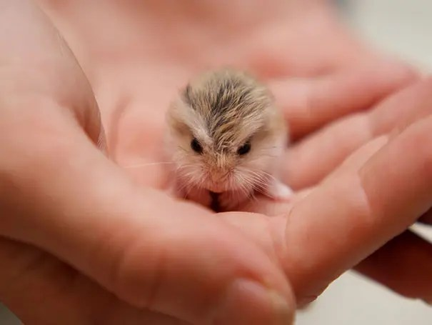 adorables animales bebe 27