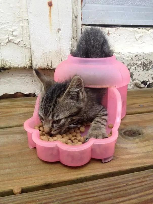 logica de gatos 3