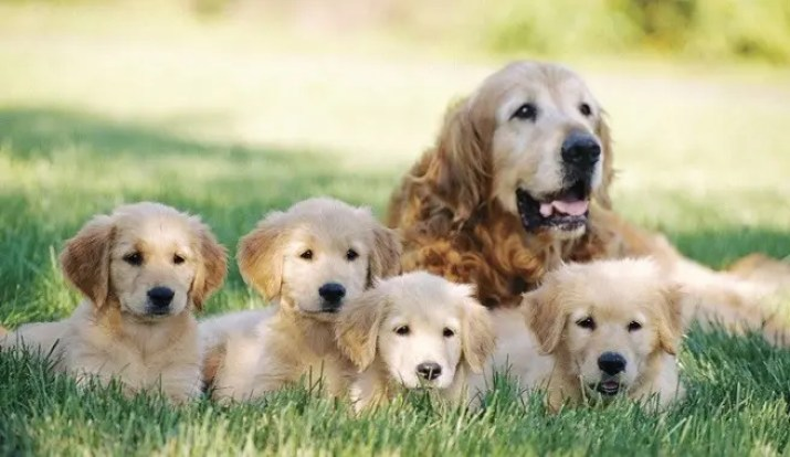 perros-cachorritos10