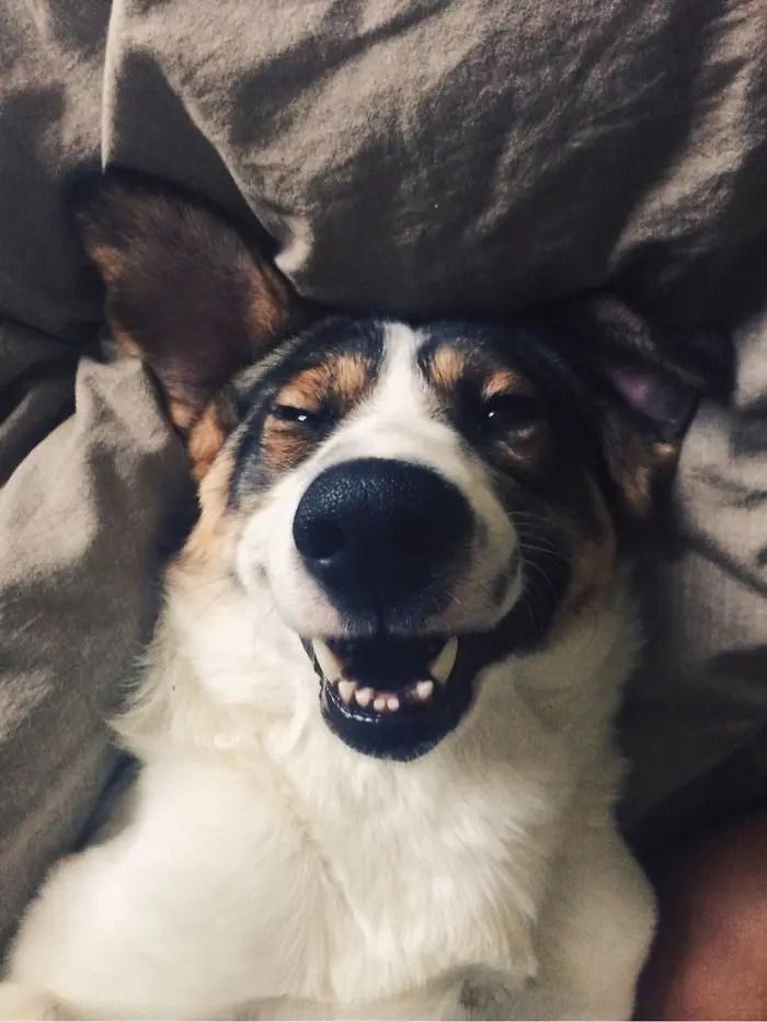sonrisas de perros 12